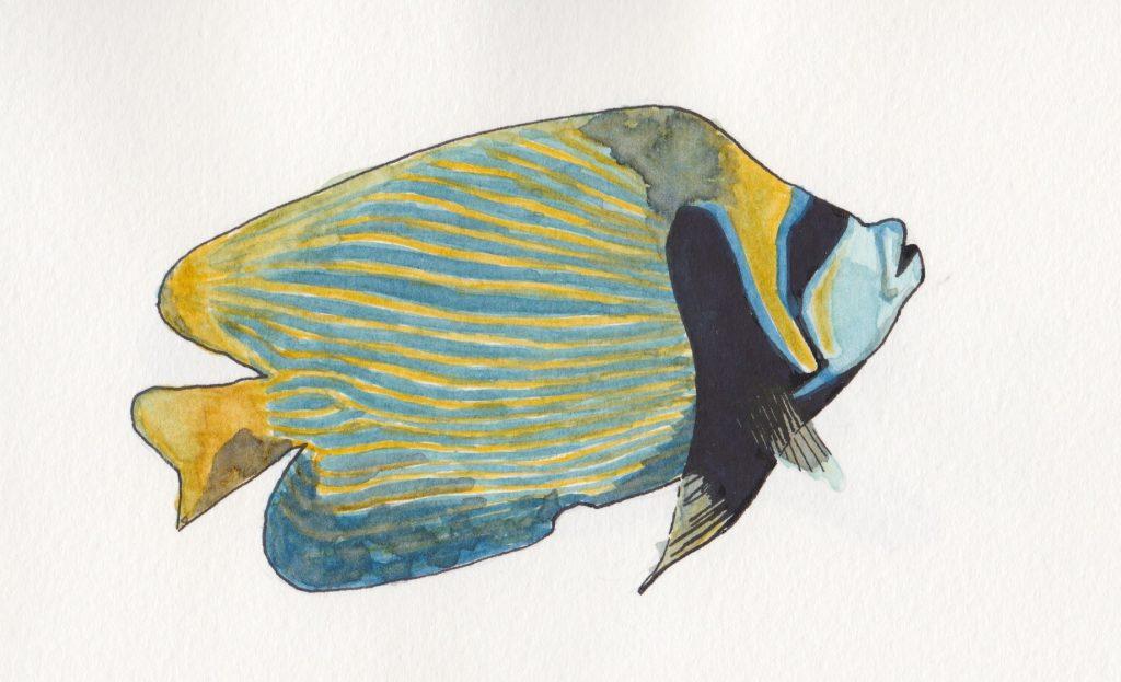 poisson ange empereur