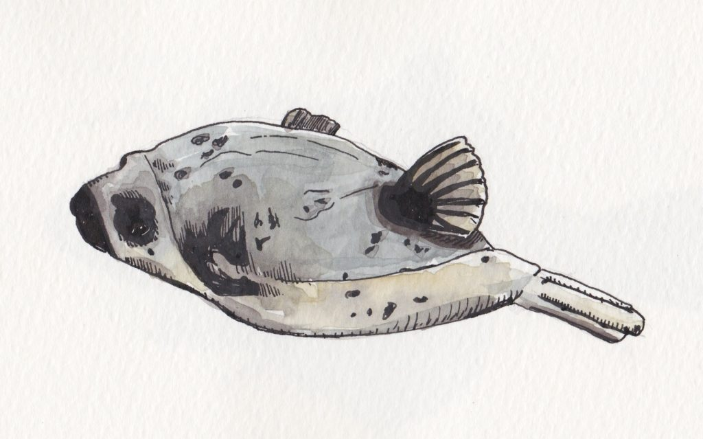 poisson ballon
