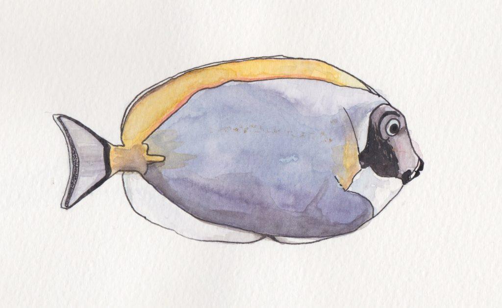 poisson chirurgien